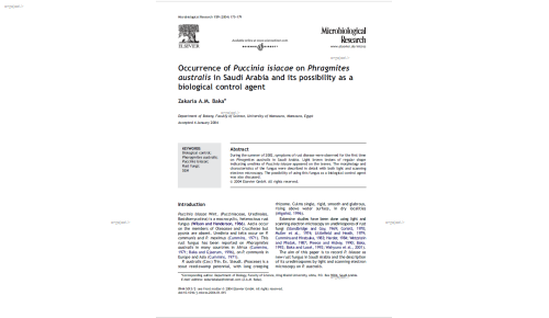 Occurrence of Puccinia isiacae on Phragmites australis in Saudi Arabia and its possibility as a biological control agent